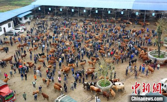 图为金桥梁大牲畜交易市场(资料图)。凤冈县融媒体中心供图