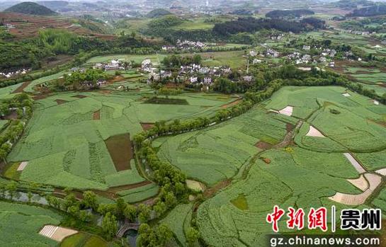 贵州黔西:稻秧移栽忙