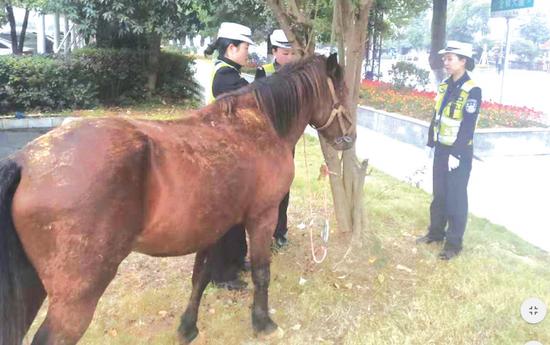 三名女警将马儿控制后拴在树边。