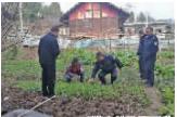 警方铲除罂粟苗