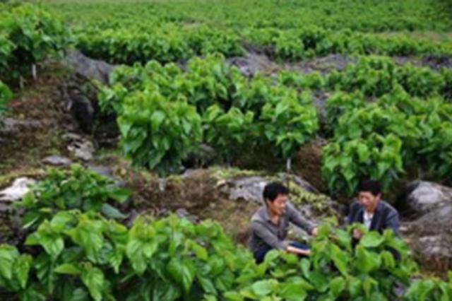 贵州启动十大生态扶贫工程 将助30万以上贫困户增收