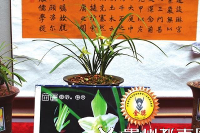 黔东南民族博物馆有名贵兰花展出
