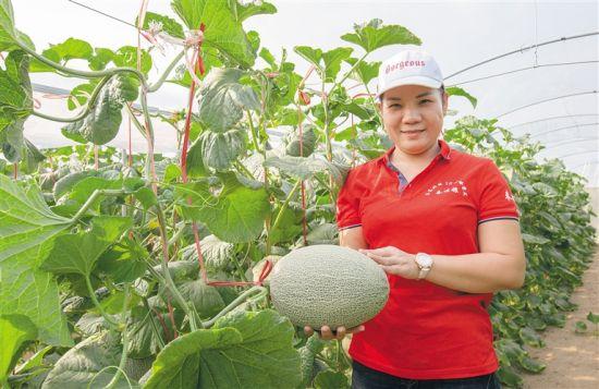 """乐东打造热带高效农业""""王牌"""" 释放发展新动能"""