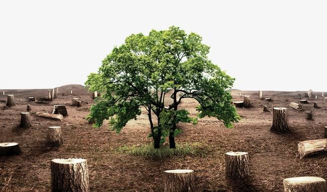 海南六村民擅自滥伐林木被判刑 法官:多学环保法