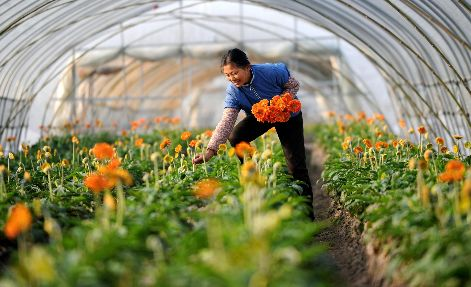 海南省出台22条措施 促进2019年下半年农民增收