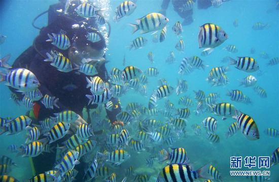 9月12日,在分界洲岛海域,一名游客在体验潜水。 新华社记者丁旭摄