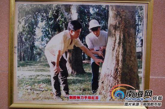 割胶能手郑红芬(右)。