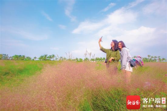 市民游客在桂林洋国家热带农业公园粉黛乱子草爱心广场拍照。海南日报记者 袁琛 摄
