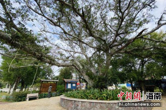 西方村文化广场。凌楠 摄