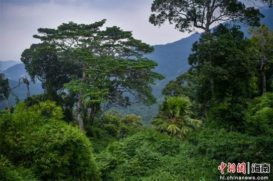 首批国家公园名单公布 海南热带雨林国家公园入选