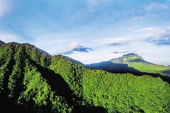 黎母山国家森林公园。海南日报记者 李幸璜 摄