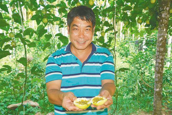 枫顺种养专业合作社负责人赵东辉展示黄金百香果。本报记者 邓钰 摄