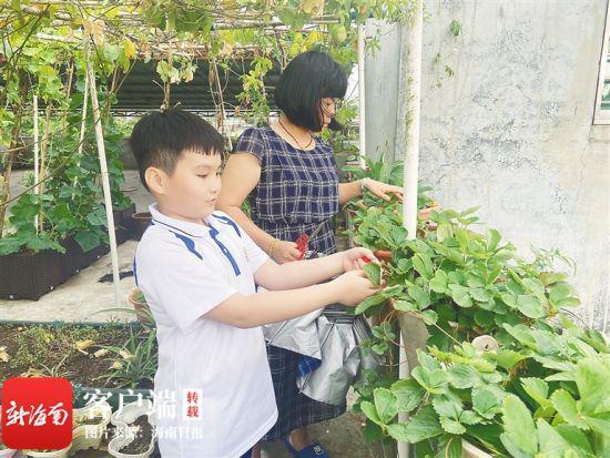 临高加来农场陈妹英阳台种花、赏花 记录鸟语花香