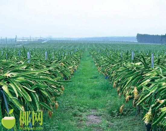东方一个项目获批创建国家农业标准化示范区