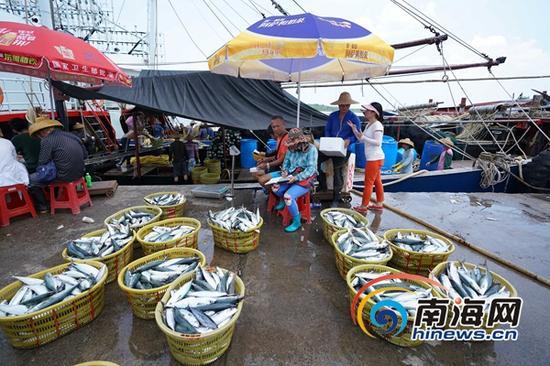 王彦予在码头和鱼老大讨价还价,她想尽量降低成本。海报集团全媒体中心记者 王凯 摄