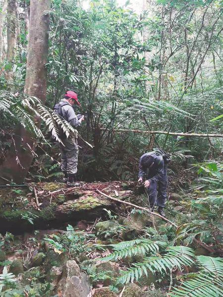 護林員在雨林中巡邏。 圖片由受訪對象陳學波提供