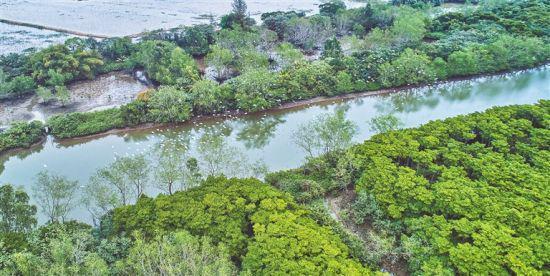 海口东寨港湿地生态修复工程建设完工