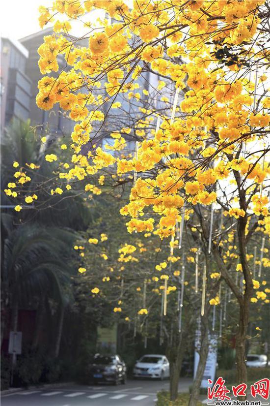 一朵朵,一團團……都在展現著迷人的風姿。吳印 攝