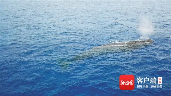 """探索海洋""""鲸""""灵的生命故事"""
