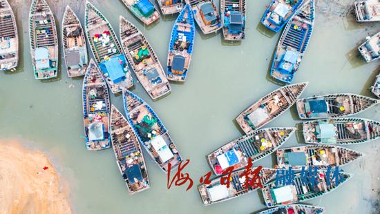 5月1日,美兰区三联社区码头,不少返港渔船停靠岸边。海口日报记者 康登淋 摄