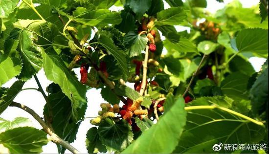 另外,注意树上有蚂蚁和蜜蜂之类的虫子,不要弄到身上。