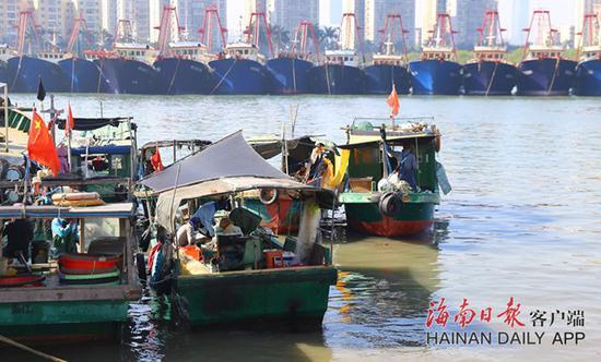"""防御台风""""环高"""" 海口渔船归港避风"""