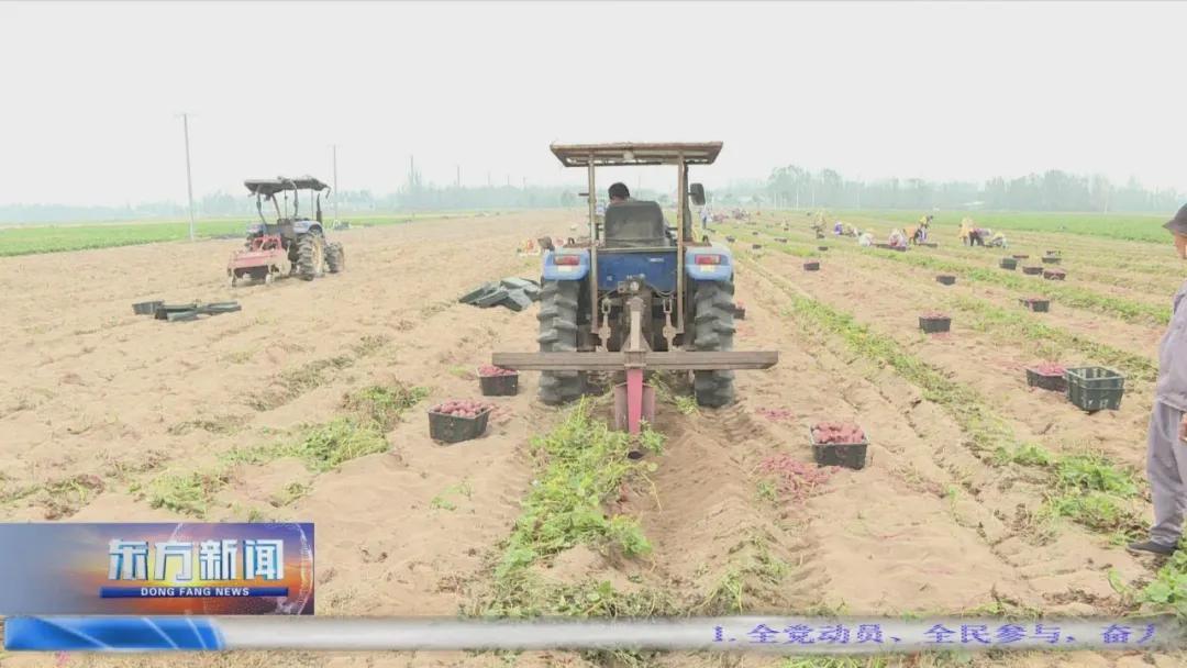 东方:热带特色高效农业硕果累累 百万亩感恩平原活力迸发