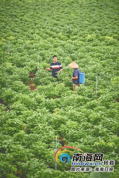 江林波大部分工作时间都要下乡,和农户聊天,最实用的信息都是从聊天过程总结得到的