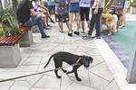 小区欲清理大型犬引爆民众矛盾 百人聚集对峙