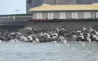 三亚生态修复正推进 阔别多年唤回海鸥