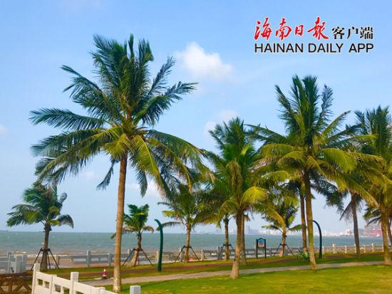 滨海大道西秀海滩岸边,在碧海蓝天的映衬下,整齐排列的椰树屹立挺拔。海南日报客户端记者周达延 摄