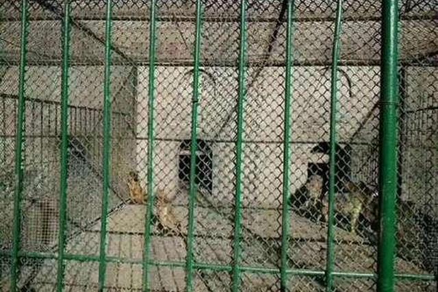 八达岭野生动物园将流浪狗喂老虎? 园方:不存在