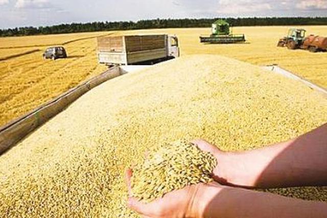 加强粮食质量安全管控 海南进口粮不得直接进入市场