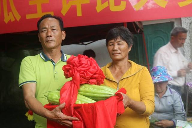 """屯昌枫木苦瓜文化节举行 """"苦瓜王""""单果重2.15斤"""