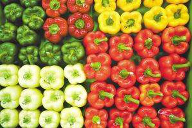4月份海南蔬菜价格明显回落 19个主要品种价格下降