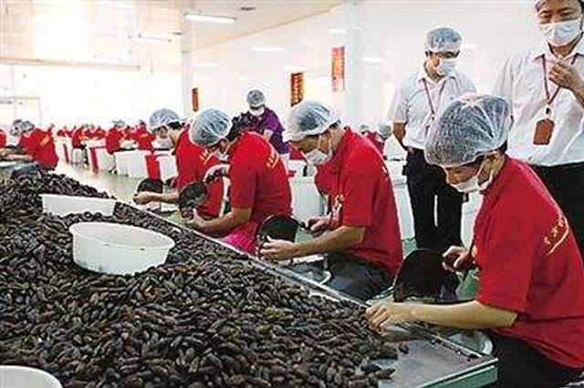 万宁退役军人办槟榔加工合作社 带贫困户就业致富
