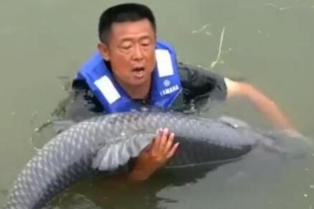 """男子钓150斤巨型青鱼:""""肉搏""""1小时 6次被拉下水"""