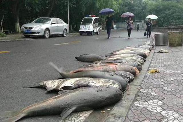 这个大学捞起巨型鱼 要请全校3万人吃一顿(图)