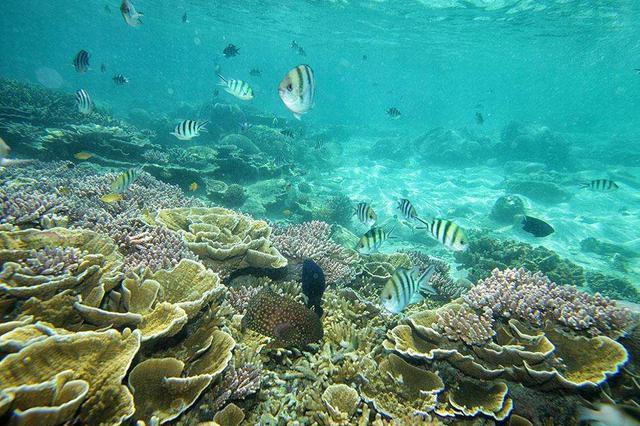 南海生物资源调查:发现40余种未记录植物资源