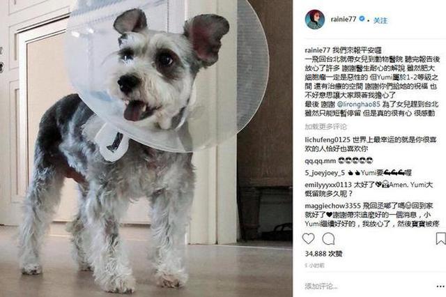 杨丞琳爱犬患病心情低落 李荣浩飞台北探望