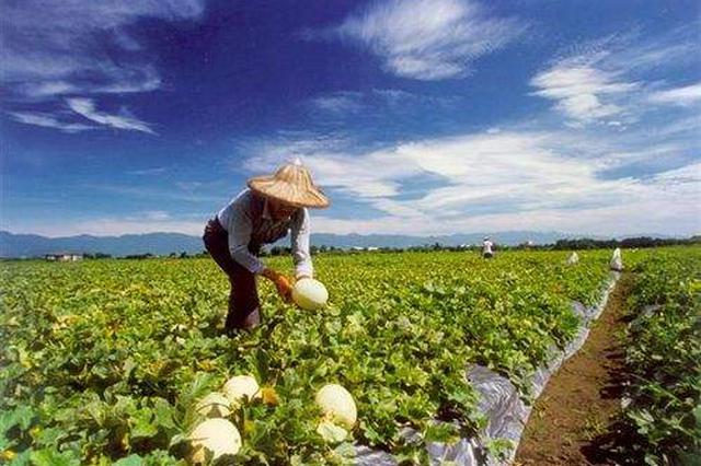 沈晓明在省农科院调研时强调:以科技创新支撑海南农业高质量