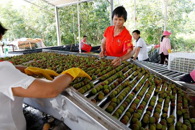 海南从五个方面促进农村剩余劳动力转移就业 促进就业均等化