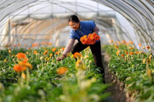 海南省统计局:农业生产经营组织化助力农民增收