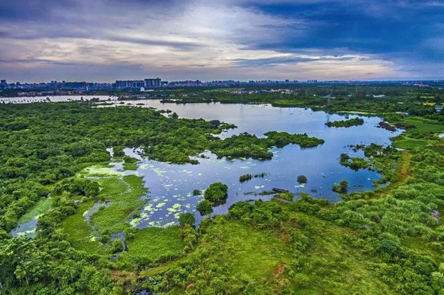《海口市湿地保护若干规定》最全解读出炉!