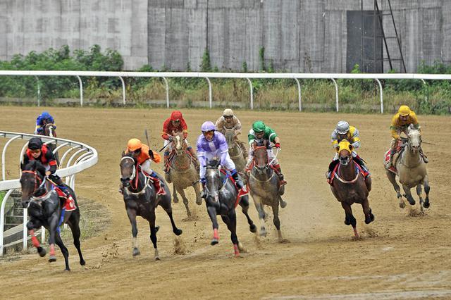 """《海南赛马运动发展规划》基本完成 """"香港模式不会出现"""""""