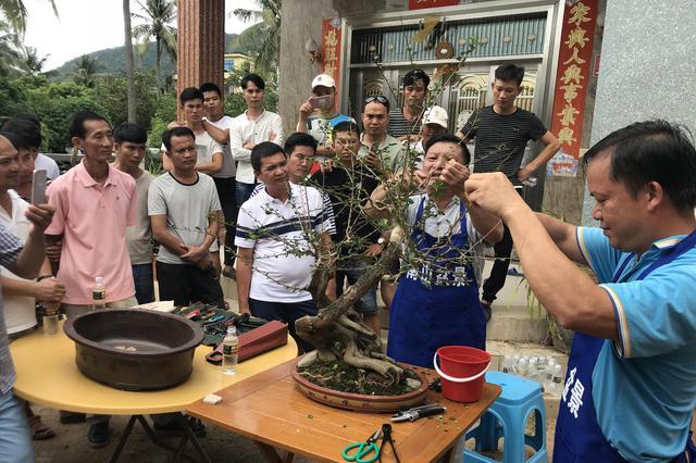 三亚开设美丽乡村综合素质提升培训班 村民现场学习盆景制作