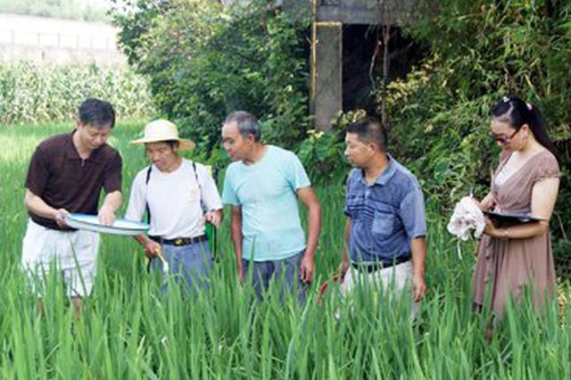 臨高縣農技專家下鄉傳技術授方法 讓農民種菜有錢賺