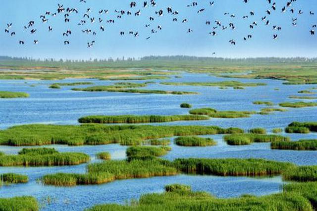 """海口濕地建設改善""""生態民生"""" 探路生態文明建設"""
