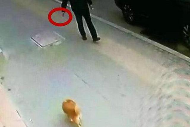 小区数十条宠物狗丧命 监控视频拍下让人气愤一幕