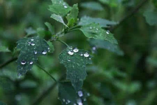 未来几天海南多云天气占主场 局地有小阵雨 最低气温20℃